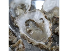 ACCC expands on oyster spat levy proposal