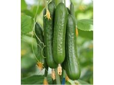 Abundant Produce commences trading on the ASX