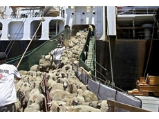 Australian livestock exporters concerned over Reforms