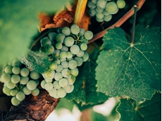 Australian wine continues to be the flavour of international markets