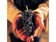 Australian wine industry not sold on GM inputs