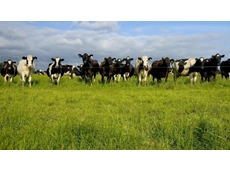 Australia's largest dairy firm Van Diemen's Land Company sold to Chinese buyer
