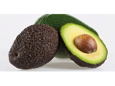 Avocado growers have not altered their harvest to create higher prices