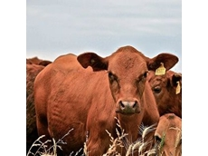 Beef producer calls for federal funding to increase onshore processing