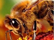 Bees set to add buzz to robot vision systems