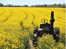 Canola oil processing to be powered with bioenergy