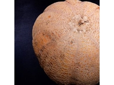 Colorado farmers receive five years probation for contaminated cantaloupes