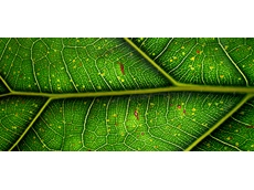 Common Antibiotic Inspires hunt for new Herbicide