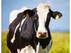 Competitive pressures ahead for dairy industry