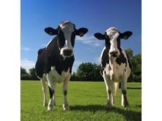 Dairy demand set to overtake supply