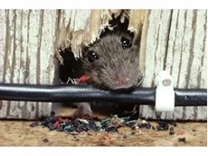 Don't let pest management eat away at you [part 2]