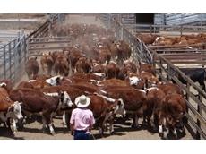 Elders and Kerr & Co Livestock enter agreement