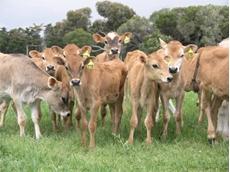 Farming Together study helps set higher milk price