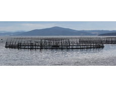 Fish farm limits cut at Tasmanian harbour