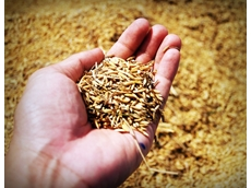 Food, drink and medicine breakthrough seeded