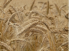 Funding boost for Grains Centre of Excellence