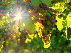 Funding flows in for Western Australia's wine regions