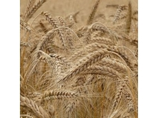 GrainCorp granted a regulation reduction