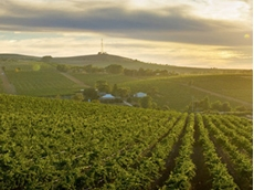 Innovative wine research centre to future-proof Australia's industry