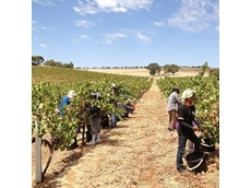 Labour-hire operator penalised for underpaying overseas farm workers