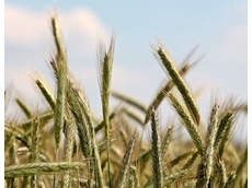 Latest Agricultural commodities report reveals a mixed forecast on farming front