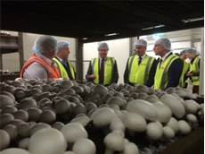 Monarto mushroom expansion to create 200 new jobs for SA