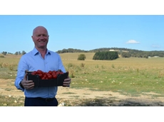 Nectar Farms plans $130 million hydroponic tomato business in Central Tablelands