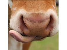 Nestle announces global animal welfare commitment