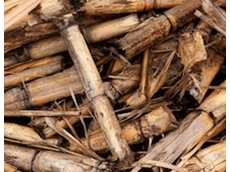 New research ideas sought to benefit Australian sugarcane industry