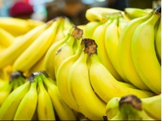 Northern Territory declared banana freckle free