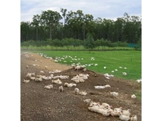 Organic poultry producer to re-enter Asia
