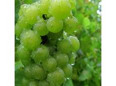 Price pressures impacting on SA wine industry