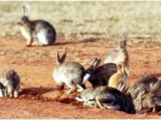 Progress for new rabbit control measures