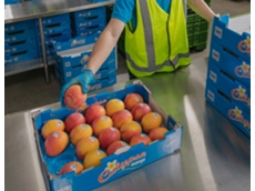 Project to grow northern Australia mango exports to China