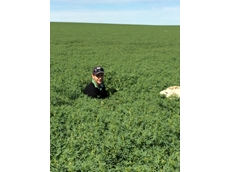 Robert Alderman from WA standing in a 2015 2.5t/ha lupin crop in the WA cropping belt.
