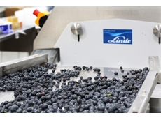 Raspberry farm snaps up new freezer tunnel