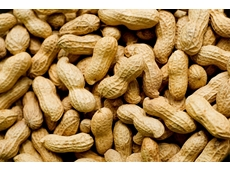 Researchers close to developing non-allergenic peanuts