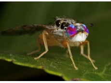 SA Government launches summer fruit fly assault