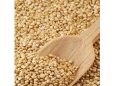 SA grain business enters external administration