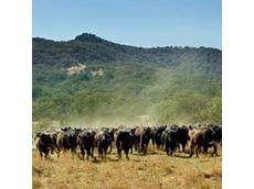 Sanger Australia announces merger with Bindaree Beef