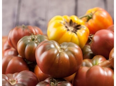 Scientists have unlocked the secret of making tomatoes taste of something again