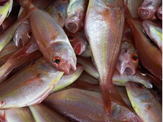 Seafood processing industry faces turbulent conditions
