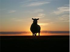 Sheep monitoring app updated