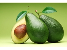 Shepard avocados set to hit shelves