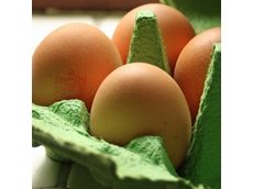 States agree to develop national standard for free range eggs