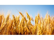 US wheat prices on the up