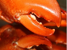 Western Australia lobster industry gets boost