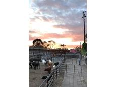 Wiley awarded Singleton regional livestock market tender