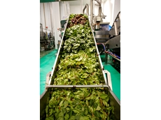 Wiley secures contract for largest pre-packed salad facility in NSW