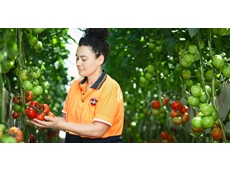 Win for Tomato Growers & Producers